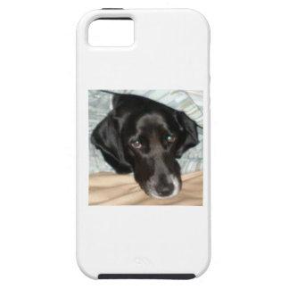Oreo the English Springer Spaniel Dog iPhone SE/5/5s Case
