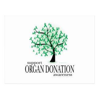Organ Donation Tree Postcard