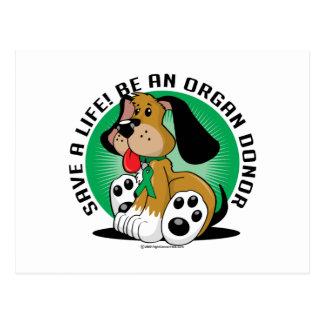Organ Donor Dog Postcard