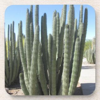Organ Pipe Cactus Beverage Coaster