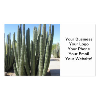 Organ Pipe Cactus Double-Sided Standard Business Cards (Pack Of 100)