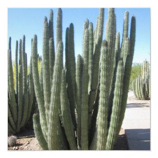 Organ Pipe Cactus Card
