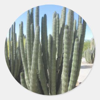 Organ Pipe Cactus Classic Round Sticker