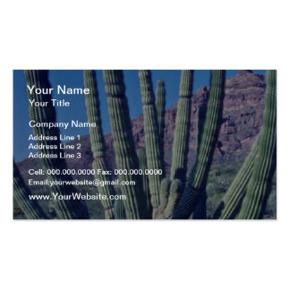 Organ Pipe Cactus flowers Double-Sided Standard Business Cards (Pack Of 100)