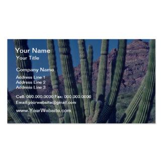 Organ Pipe Cactus flowers Business Card Template