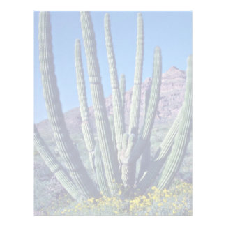 Organ Pipe Cactus flowers Letterhead