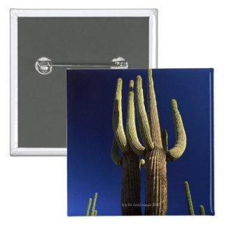 Organ pipe cactus national monument in Arizona Pins