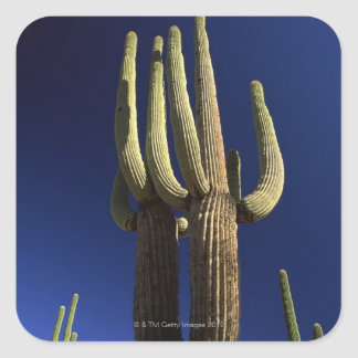 Organ pipe cactus national monument in Arizona Square Sticker