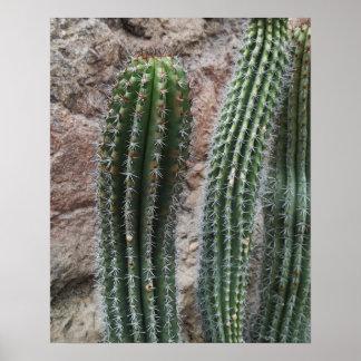 Organ Pipe Cactus Southwest Cacti Wall Decor Poster