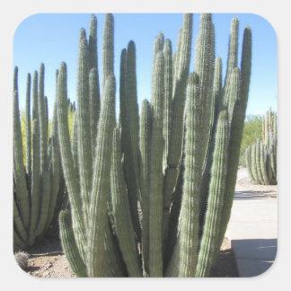 Organ Pipe Cactus Square Sticker