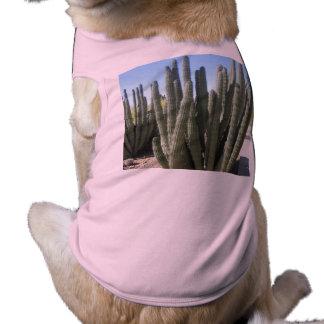 Organ Pipe Cactus Tee