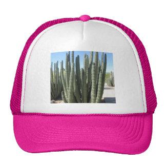 Organ Pipe Cactus Trucker Hat
