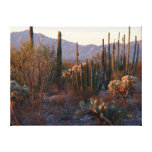 Organ Pipe National Monument Canvas Prints