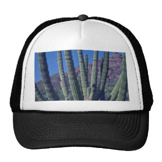 Organ Pipes Trucker Hat