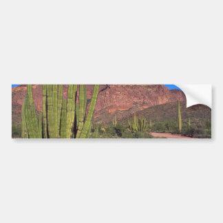 Organ Pipes In Death Valley Bumper Sticker