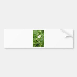Organic Basil and White Moth Bumper Sticker