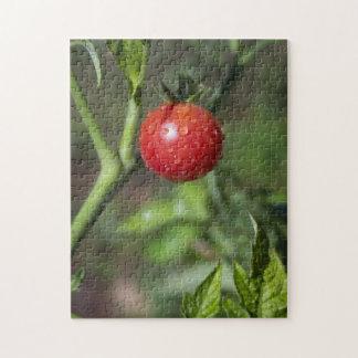 Organic Cherry Tomato Puzzle