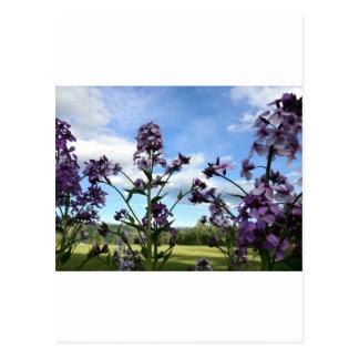 organic flowers postcard