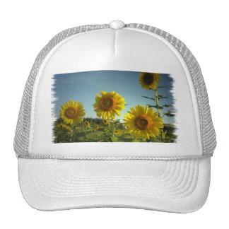 Organic Garden Sunflower Baseball Hat