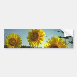 Organic Garden Sunflower Bumper Sticker