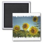 Organic Garden Sunflower Magnet