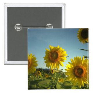 Organic Garden Sunflower Square Button