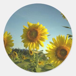 Organic Garden Sunflower Sticker