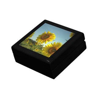 Organic Gardening Gift Box