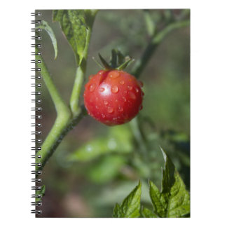 Organic Gardening Journal