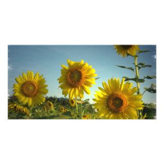 Organic Gardening Photo Card