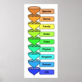 Organic life biological classification chart poster