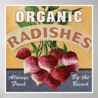 Organic Radishes Poster