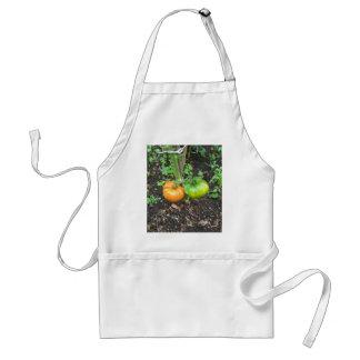 Organic Tomatoes Adult Apron