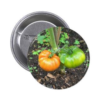 Organic Tomatoes Button