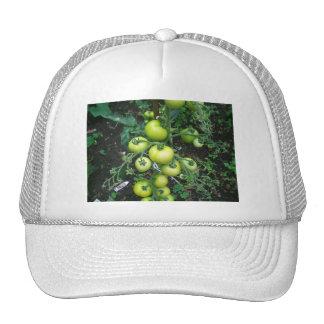 Organic Tomatoes Cap