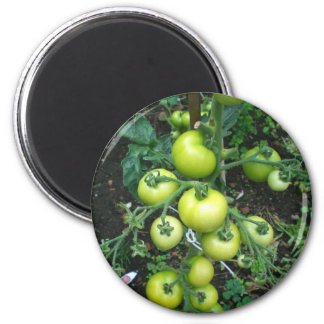 Organic Tomatoes 2 Inch Round Magnet