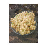 Organic White Currants From The Garden Canvas Print