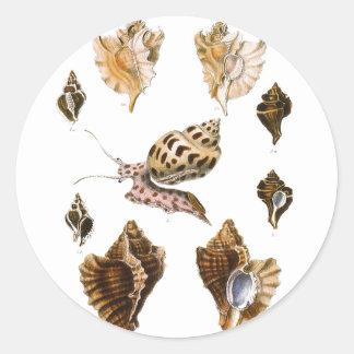 Organismos de la vida marina del vintage, caracole pegatina redonda