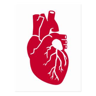 Órgano rojo del corazón postal