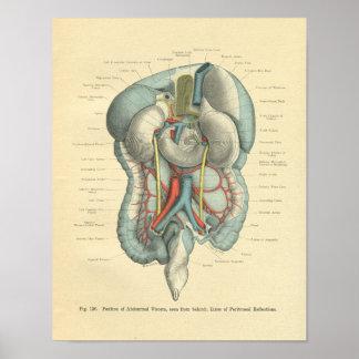 Órganos de los intestinos de la anatomía de Frohse Impresiones