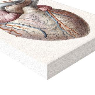 Órganos humanos del corazón de la anatomía del impresiones en lona estiradas