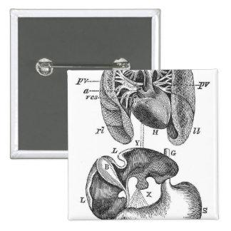 Órganos internos pins