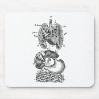 Órganos internos tapetes de ratones