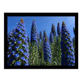 Orgullo azul de las flores de Madeira Postal