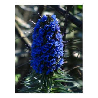 Orgullo de la flor de Madeira Postales