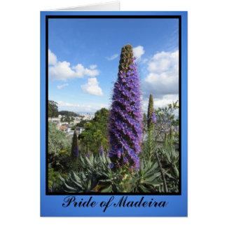 Orgullo de la flor de Madeira Tarjeta