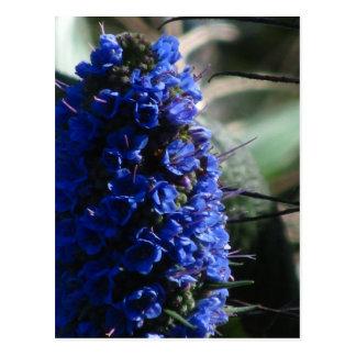 Orgullo de la flor de Madeira Tarjetas Postales