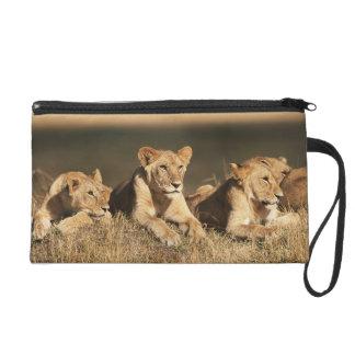 Orgullo de leones masculinos jovenes