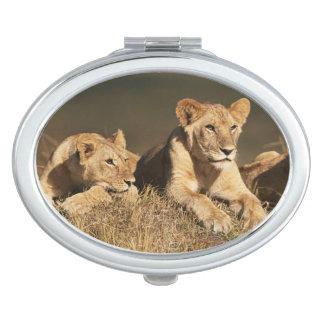 Orgullo de leones masculinos jovenes espejos de viaje
