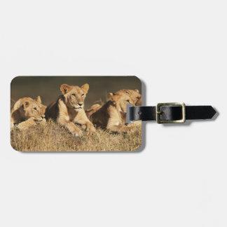 Orgullo de leones masculinos jovenes etiquetas para maletas